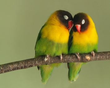 ws_Love_Birds_1280x1024.jpg